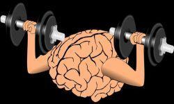 Cervello in allenamento