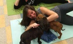 Lezione di Puppy Pilates